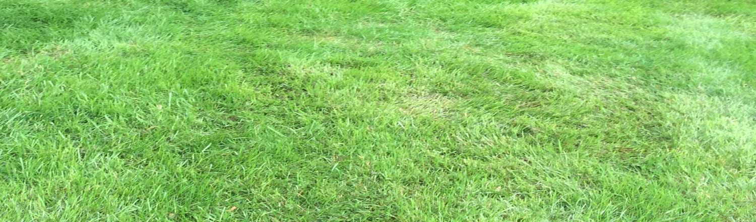 Lawn mowing in residential and commercial sites